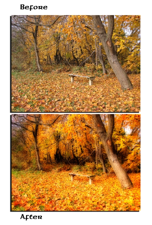 fall-before-after